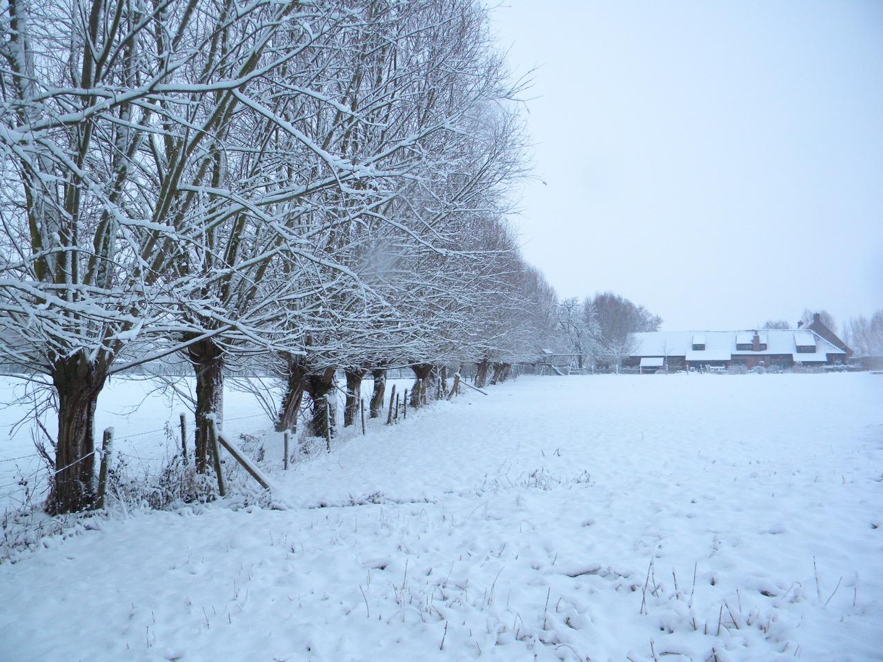 vergezicht van onze vakantiewoning in de sneeuw met de door knotwilgen omzoomde tuin