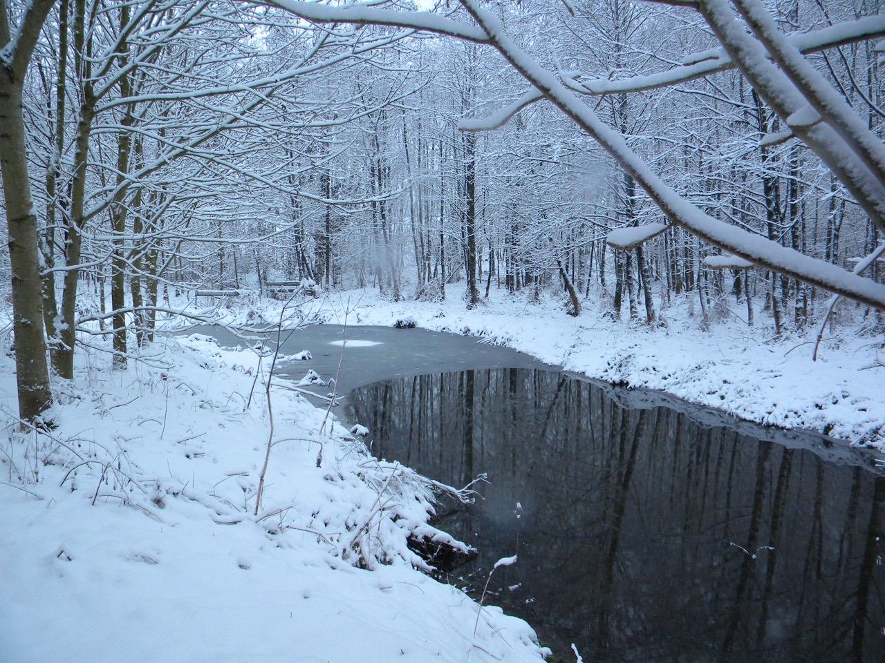 vijver in de sneeuw aan bos bij vakantiehoeve in de vlaamse ardennen en zwalmstreek